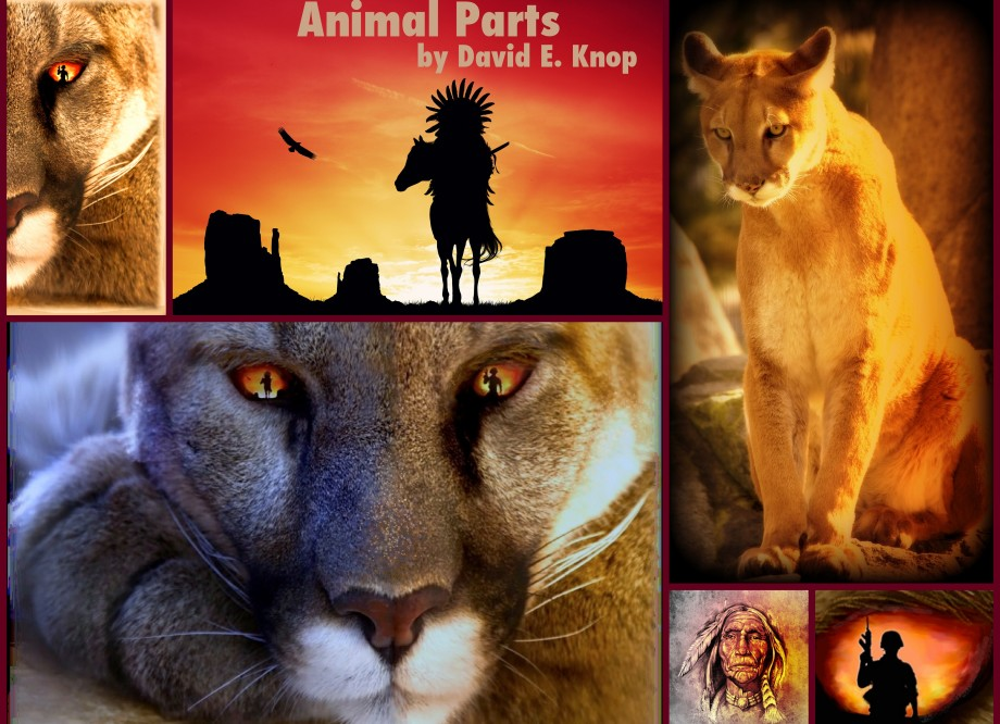 Collage of Animal Parts